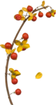 Mysterious Forest_Element_Scrap and Tubes39.png
