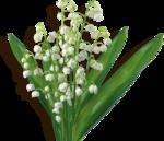 «kimla_Spring_Cooking»  0_91076_d6f4fa42_S