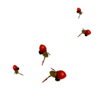 Renadesigns_forestfruits_el2.png