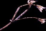 ldavi-ThePoet'sKeepsakes-driedflower9.png