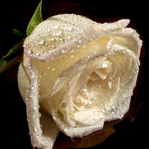 «Pearls of Joy»  0_9a1a0_dba28286_L
