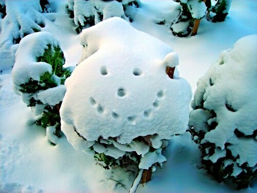 Улыбка зимы