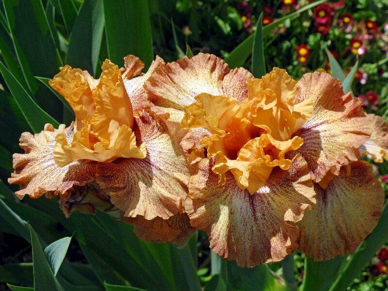 Цветы Южного Берега Крыма из Никитского Ботанического Сада