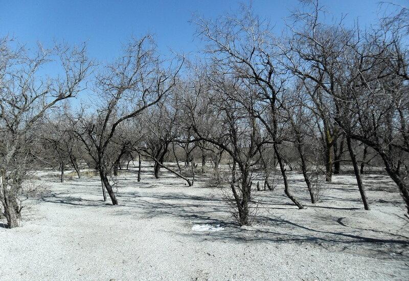 Деревья, весна 2012