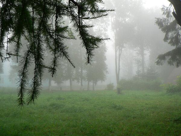 туман в городе парк