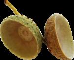 acorns42.png