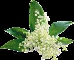 цветы (88).png
