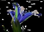 цветы (94).png