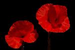 цветы (109).png