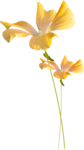 Lilas_Old-Garden_elmt (7).png
