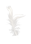 Palvinka_FlowerAdventure_feather2.png