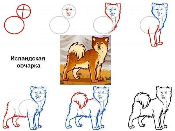 как нарисовать собаку для детей 4.