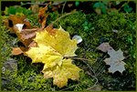 Листья-в-парке.jpg