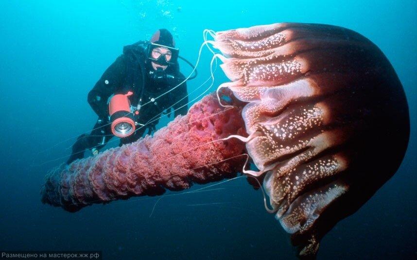 скачайте смешные картинки про медуз и водолазов смело идти