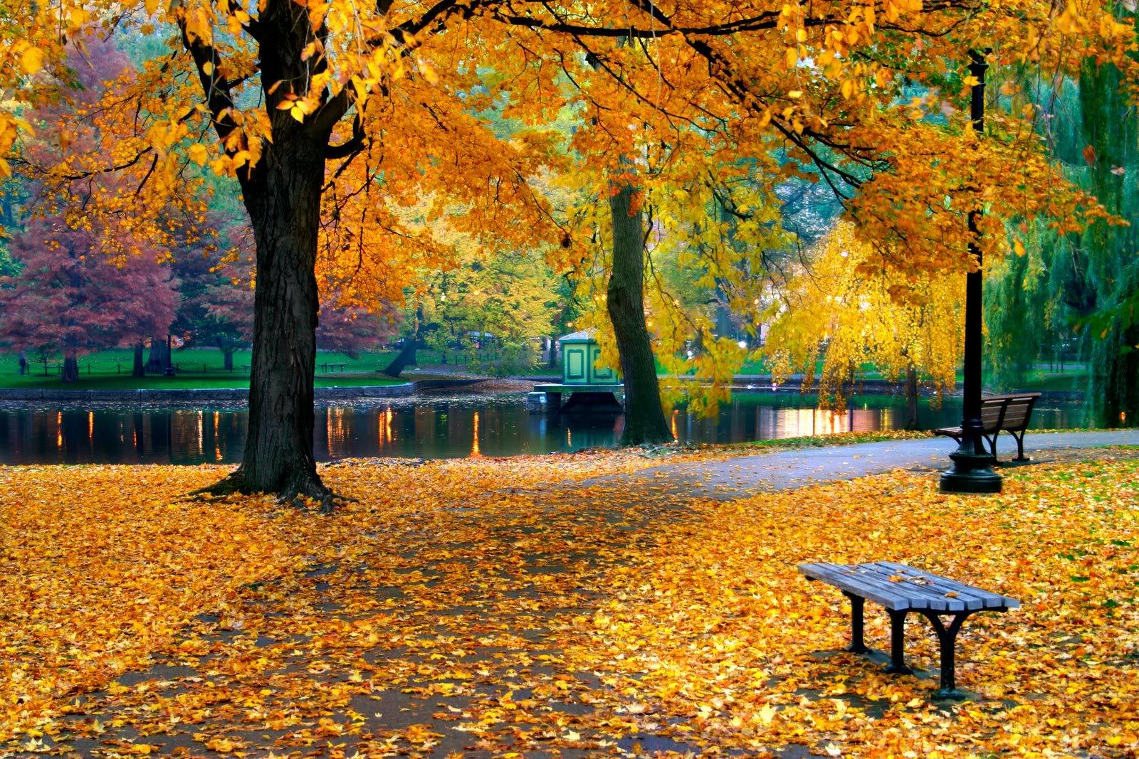 Листья жгут, листья жгут, листья жгут ... . Обсуждение на LiveInternet -  Российский Сервис Онлайн-Дневников