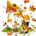 mushroom 13.png