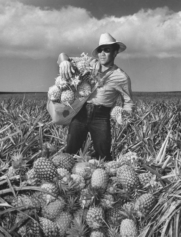 A pineapple picker in 1941