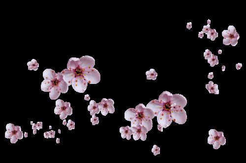 «Marta_FloweringCherries» 0_90298_ab7e3735_L
