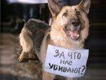 #Самара. Травля собак и кошек продолжается. Будьте осторожны, домашние питомцы тоже не застрахованы!
