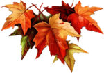 fallleaves-GD.png