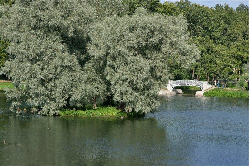 Гатчинский парк, Ивы на острове