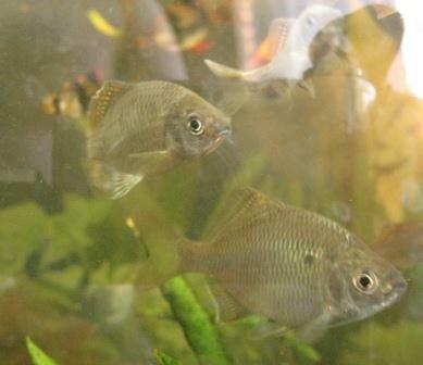 Aquarium Glaser, сентябрь 0_f7d65_1572c64f_L