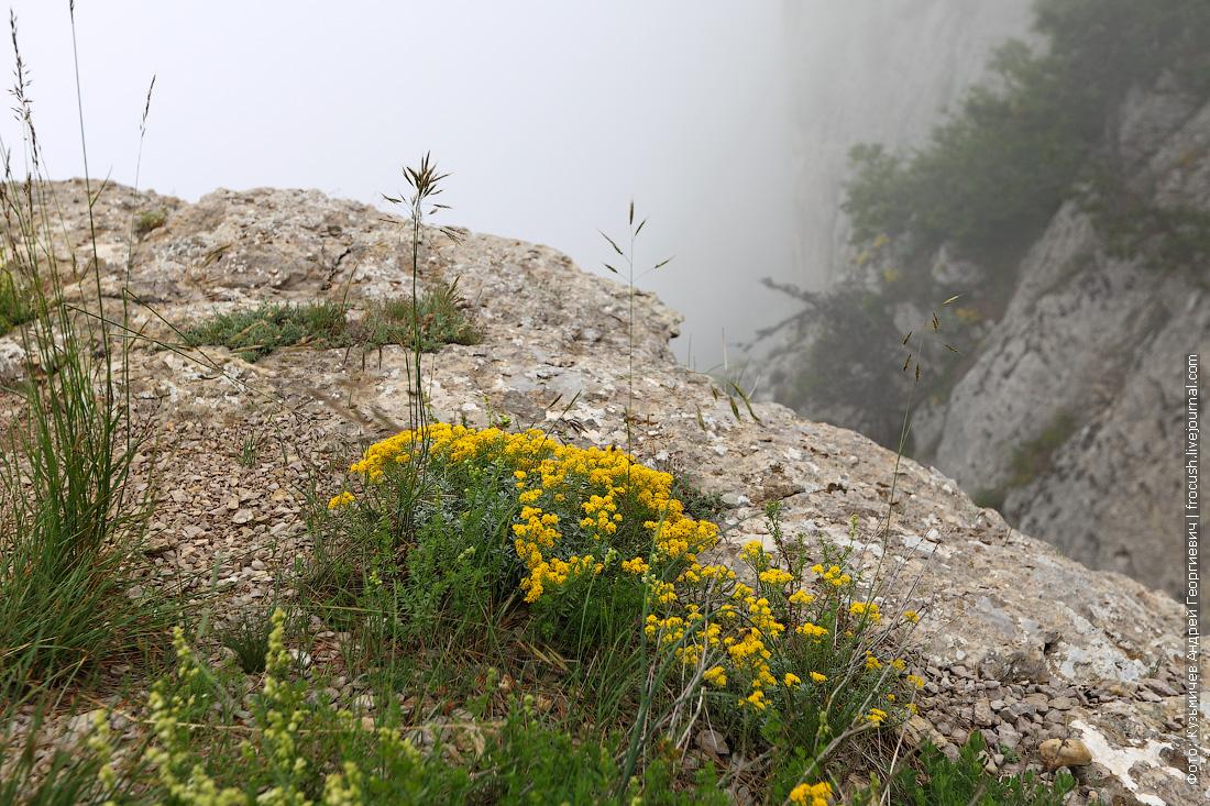 цветочки на вершине горы Ай-Петри