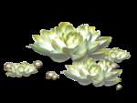 цветы (160).png