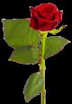 цветы (183).png