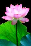 цветы (186).png