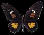 jbillingsley-autumnbreeze-butterfly3.png