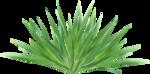 Forest_Scent_Zalinka_el (44).png