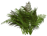 R11 - Nature Time 1 - Fern - 004.png