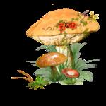 mushroom 1.png