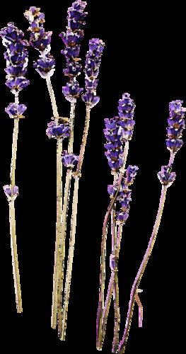 «Kimla_LavenderStory» 0_90257_14708d63_L