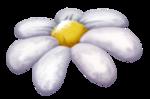 «Charming_Dwarf_Forest» 0_9101a_652743d1_S