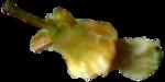 Скрап набор - Рататуй (Ratatouille) 0_91235_690f7a64_S