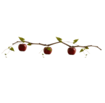Renadesigns_forestfruits_el11.png