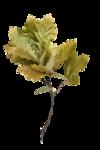 Thaliris_forestfruits_el15b.png