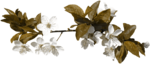 feli_nb_flowers branch3.png