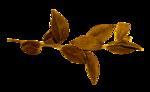 «jeans_autumn» 0_944a7_efacfc23_S
