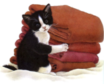 Cat_with_Blankets_-_Ms_Andy.png