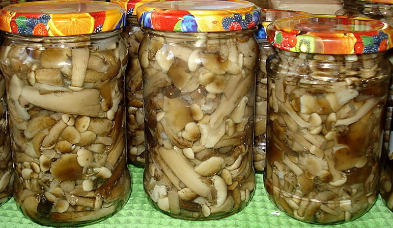 Отменные грибы! Маринованные опята