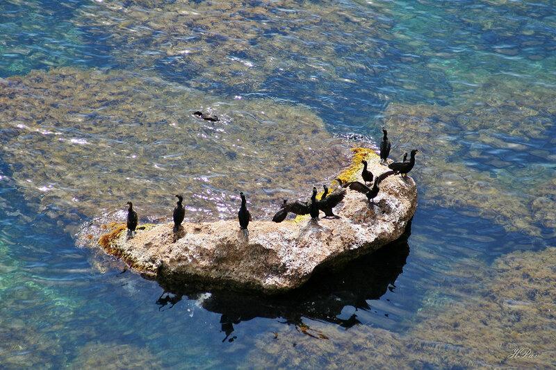 Бакланы на камне