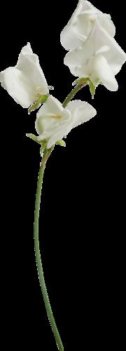 Полевой цветок-2.png