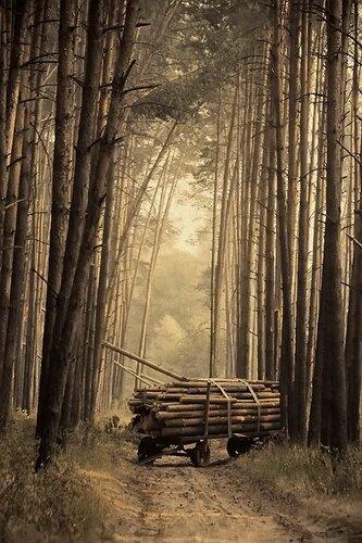 ...в лесу..
