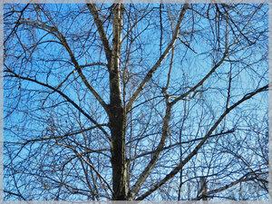 Весна возвращается в Молдову — в Бельцах солнечно