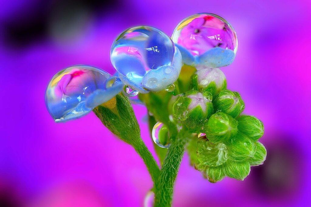 Открытки роса на цветах