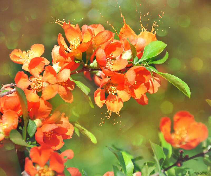 Расплескавшиеся цветы