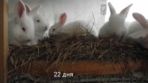 Крольчата. 0_8f776_c3ecf6ac_L